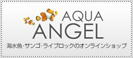 海水魚・サンゴの通信販売サイト アクアエンゼル