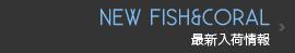 最新の海水魚・サンゴ入荷情報