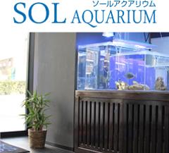 大田区東糀谷の海水魚・サンゴ専門店ソールアクアリウム